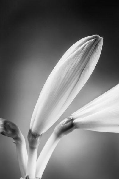 Nahaufnahme einer Blume