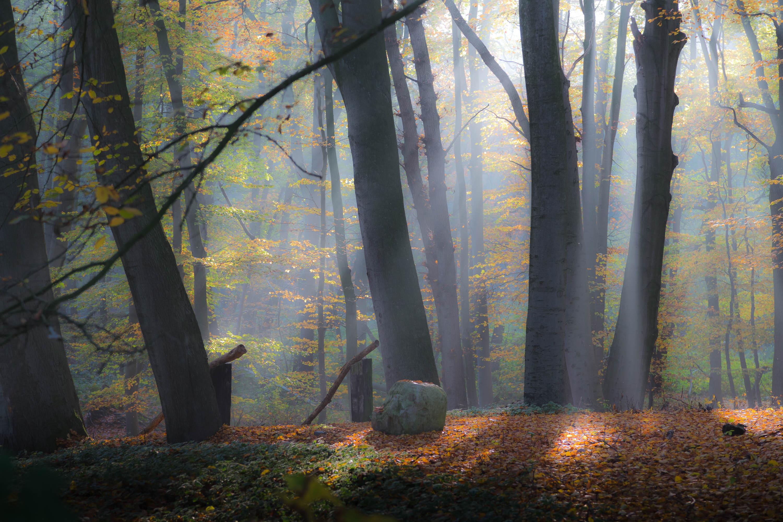 Wald mit Lichtstrahlen