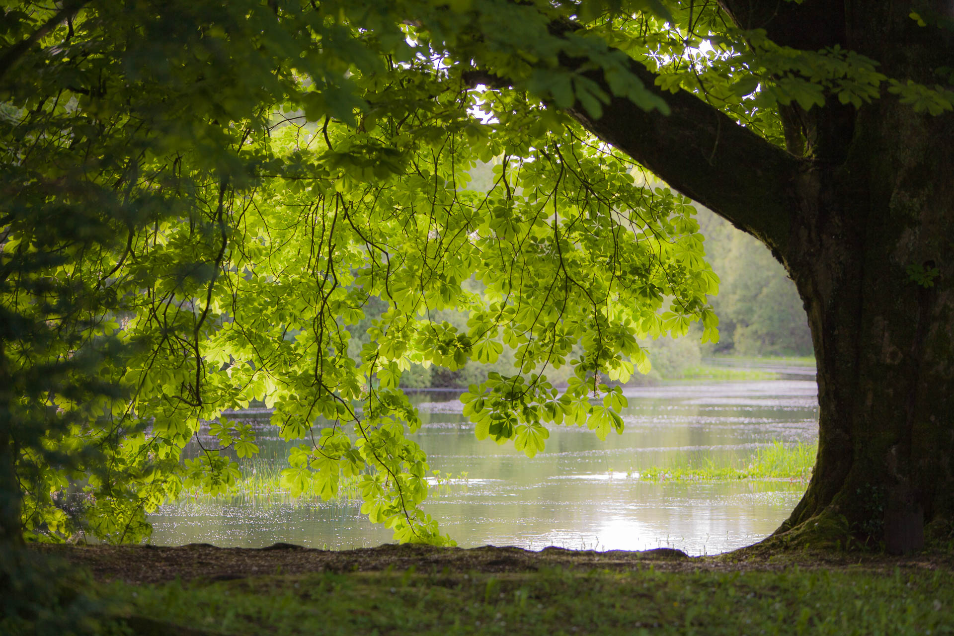 Bäume bei Cong Abbey, Co. Mayo, Ireland