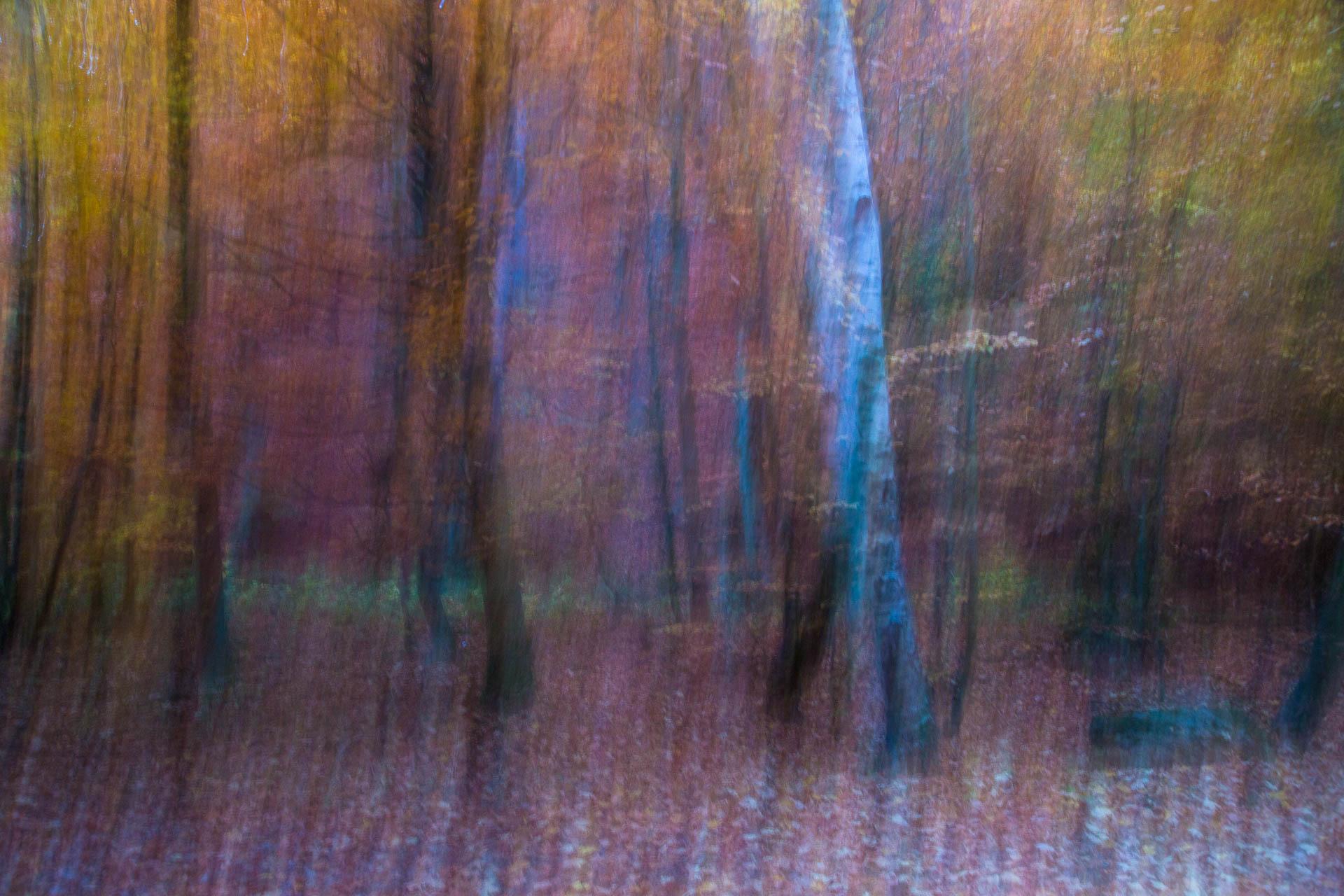 Birke und andere Bäume